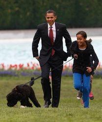 Bo, chien star des Obama