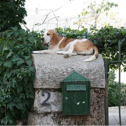 chien boite aux lettres