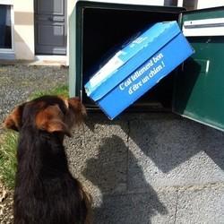 chien chat woufbox miaoubox
