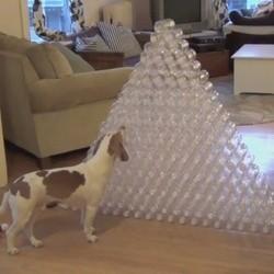 un chien joue avec plus de 200 bouteilles en plastique