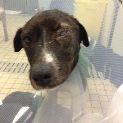 chien abandonné brûlé adoption