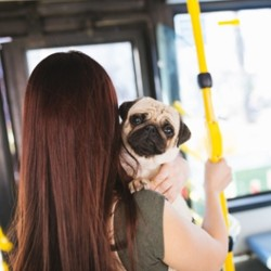 un chien dans un bus