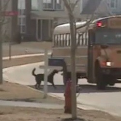 Chien et bus