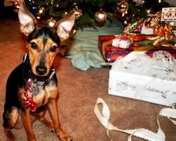 chiens cadeaux de noel