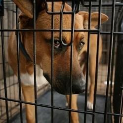 chien enfermé dans une cage