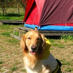 Chien au camping