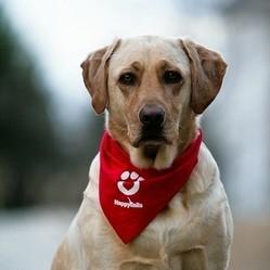 chien cancer prostate