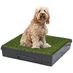 canisette chien crotte