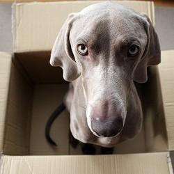 préparer son chien au déménagement