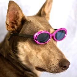 chien acteur de cinema