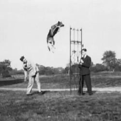 chien champion saut hauteur video guerre mondiale