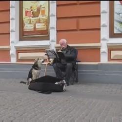 un chien errant chante pour un musicien