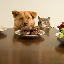 alimentation chien alimentation chat