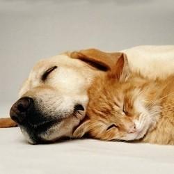 assurance santé pour animaux mutuelle animale pour chien et chat