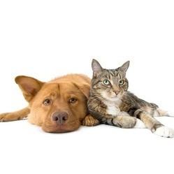 les chiens et les chats sont bons pour la santé