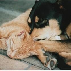Les chiens et les chats rêvent eux aussi