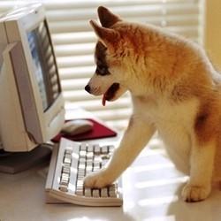 chien chat images photos télé