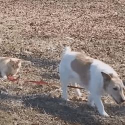chien chat laisse
