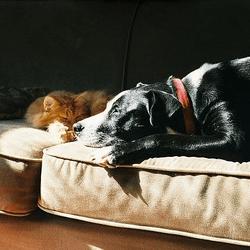 chien chat lumière