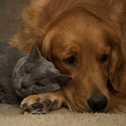 chin et chat tristes
