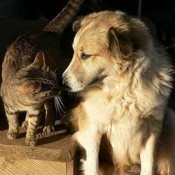 chien chat espérance de vie