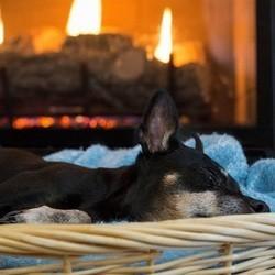 chien cheminée hiver