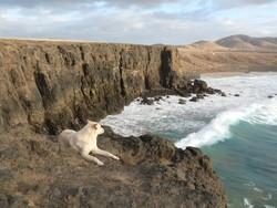 chien chute falaise