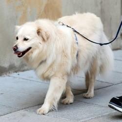chien dans la ville