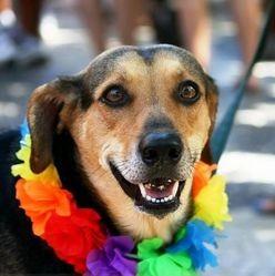 chien collier de fleur carnaval rio