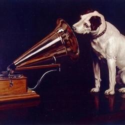 chien concert