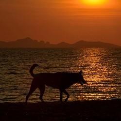 chien coucher de soleil mer