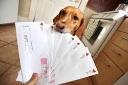 chien mange courrier