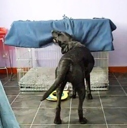 chien s'enroule seul couverture