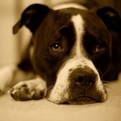 que faire en cas de crise d 39 pilepsie du chien soigner son chien wamiz. Black Bedroom Furniture Sets. Home Design Ideas