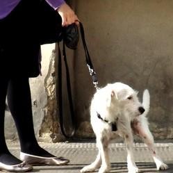 les crottes de chiens transformées en énergie