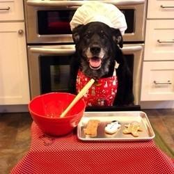 chien noël repas fête