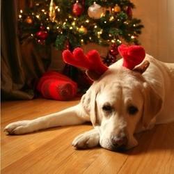 http://wamiz.com/chiens/conseil/noel-quels-dangers-pour-vos-animaux-3065.html