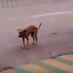 chien danseur