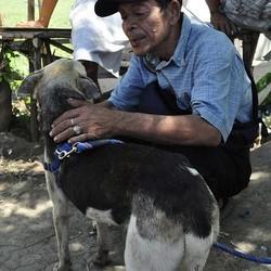 une chienne sauve des fillettes et est défigurée par l'accident