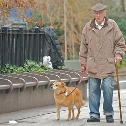 Chien et personne âgée Alzheimer