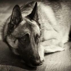 chien dépression