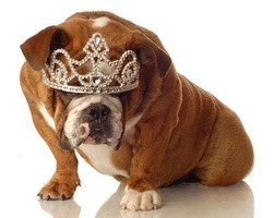 chien diamant