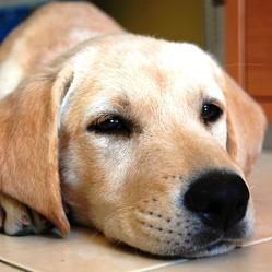 nourrir un chien au goût difficile