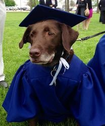 Chien diplômé