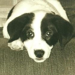 un chien disparaît pendant 4 ans et retrouve ses maîtres