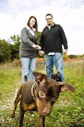chien divorce garde
