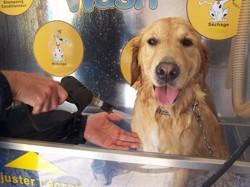 chien lavage