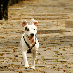 chien promenade paris