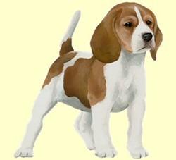 chien virtuel beagle
