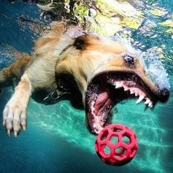chiens photos sous l'eau piscine